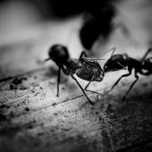 La cigale et la fourmi - Par Aya Tahery